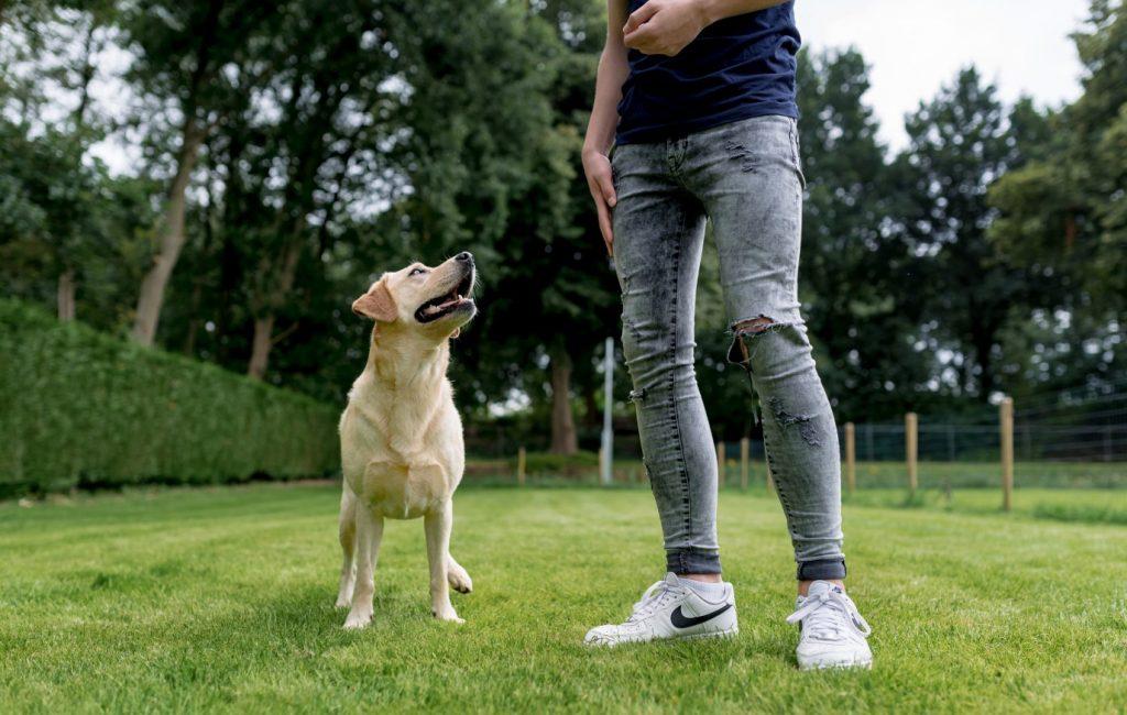 Opleiding therapiehond - Ik hou te veel van deze hondenbaan Baas-en-Beest-Fotografie_4648