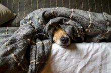 Zo herken je een zieke hond