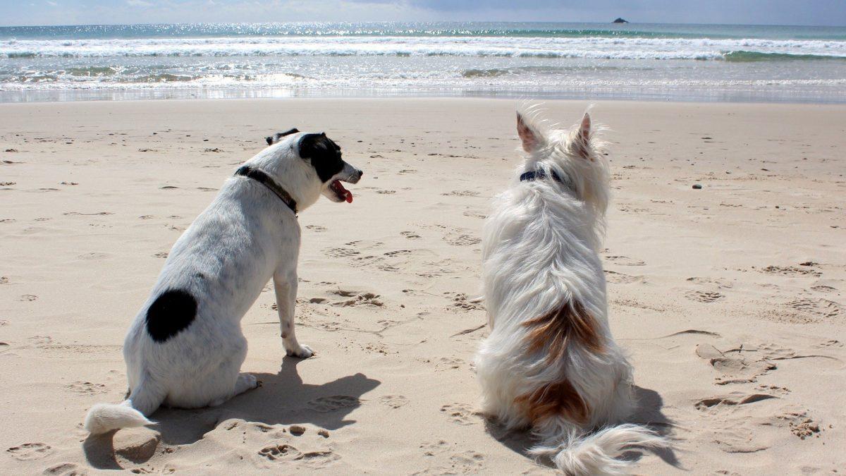 Tijd voor een vakantie met je hond