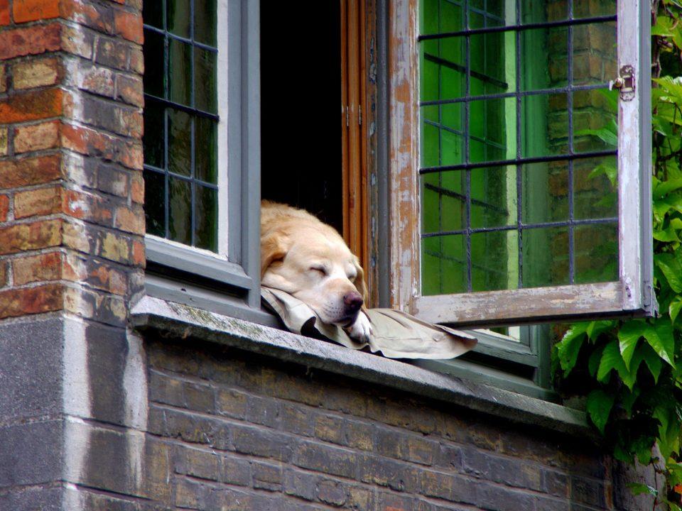 Tips voor hondenbezitters die een appartement zoeken