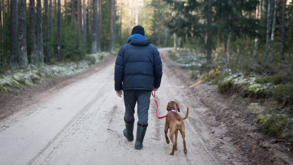 Verzekerd met de hond op pad